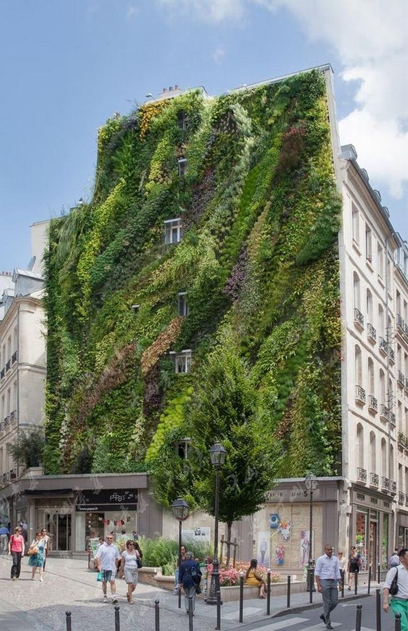 垂直绿化,植物墙