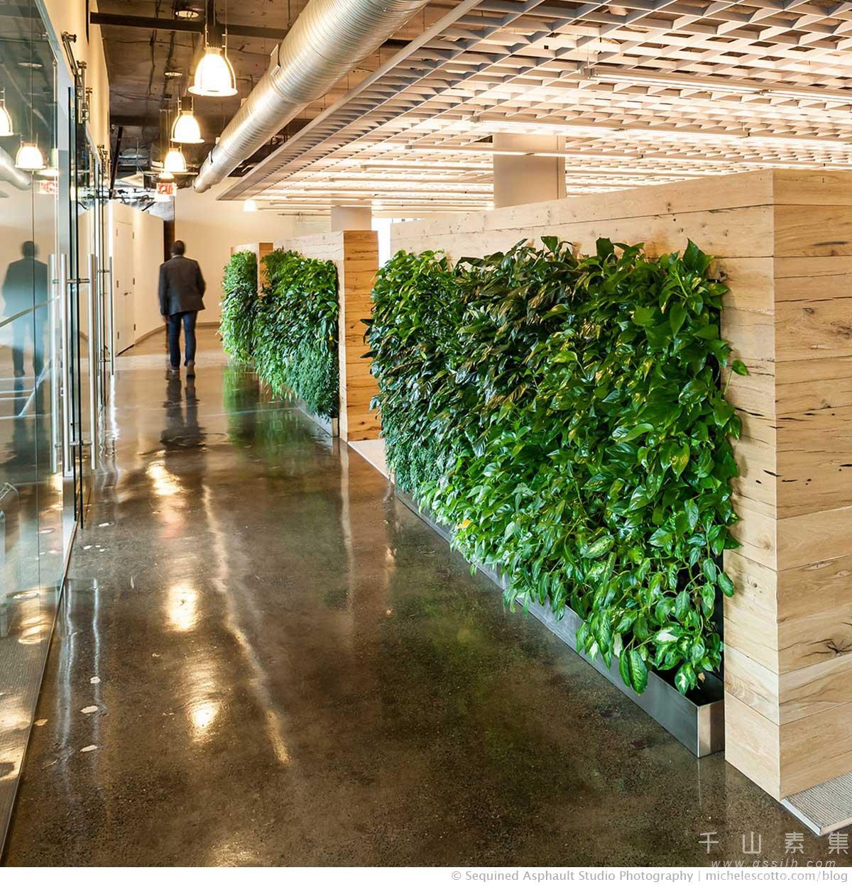 走廊垂直绿化