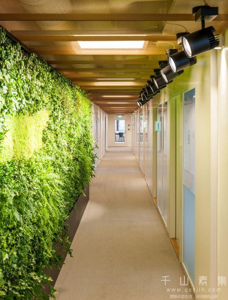 走廊立体绿化
