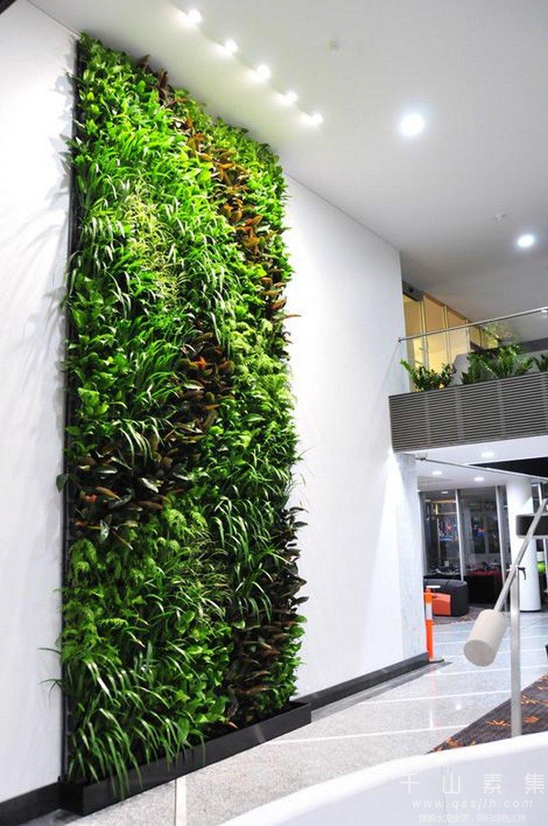 植物墙,植物墙打造