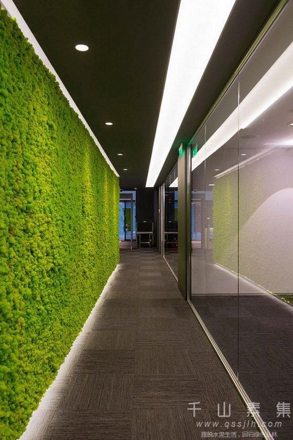 植物墙,走廊植物墙