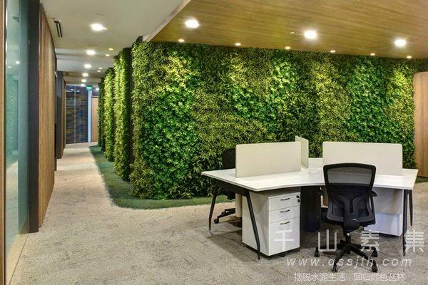 室内垂直绿化植物墙维护的5个禁忌