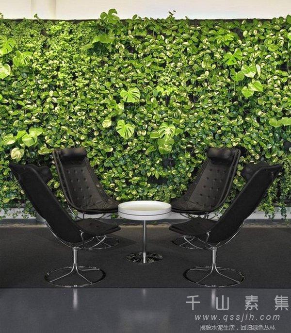 植物墙,室内植物墙