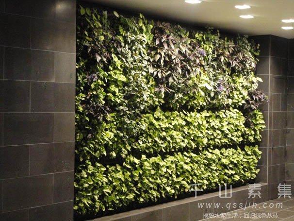 植物墙养护,植物墙景观