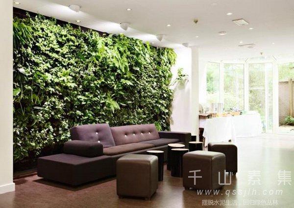 室内植物墙,办公室植物墙,家庭植物墙