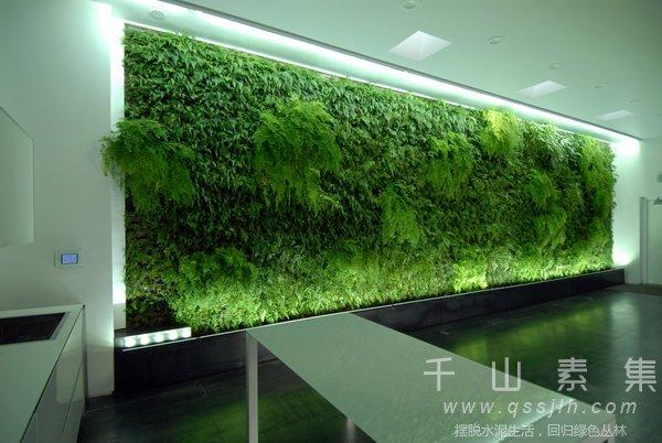 植物墙灯光,室内植物墙