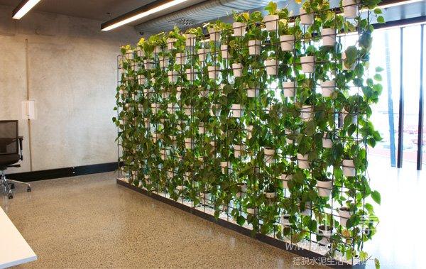 室内植物墙,植物墙制作