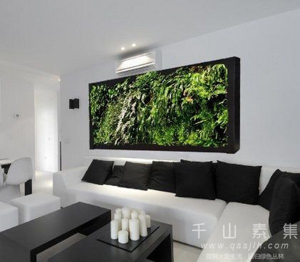 家庭植物墙,室内植物墙,植物墙设计,植物墙设计