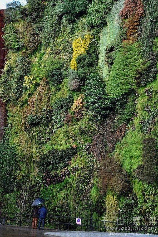 雾霾,城市绿化,城市植物墙