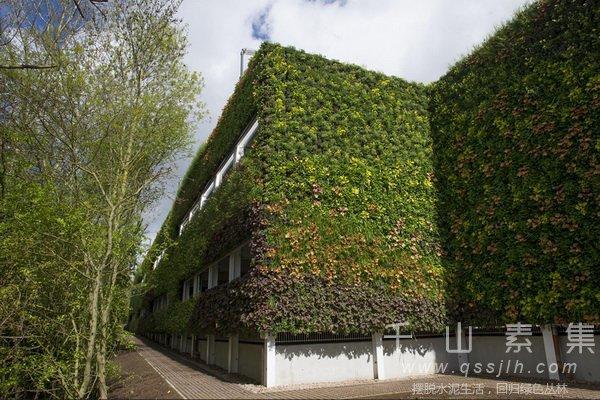 城市绿化,城市植物墙