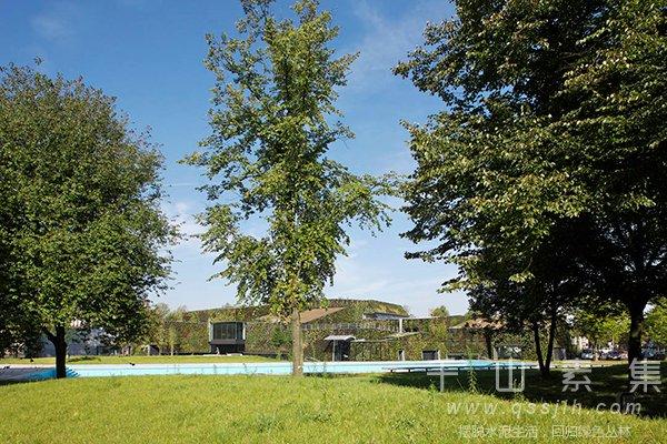 社区植物墙,公园植物墙