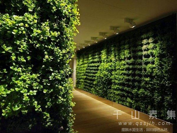 夏季植物墙,室内植物墙,植物墙好处