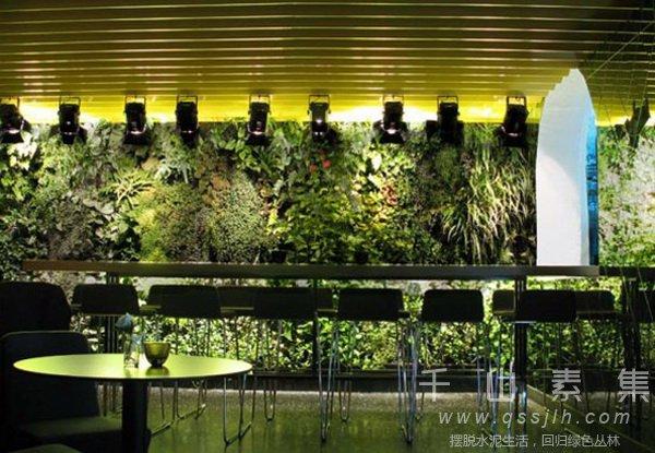 植物墙设计,植物墙打造
