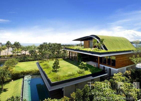 屋顶花园植物