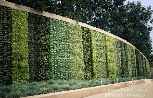 城市植物墙,城市垂直绿化