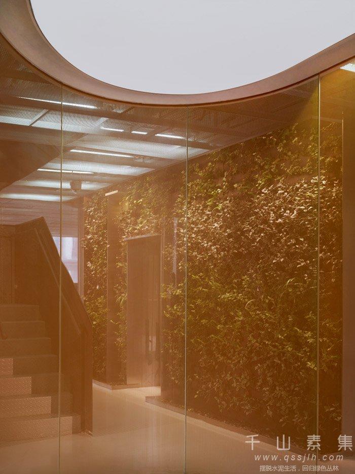 办公室植物墙,天津植物墙,植物墙设计,植物墙景观