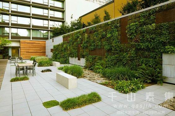 植物墙设计,植物墙观景