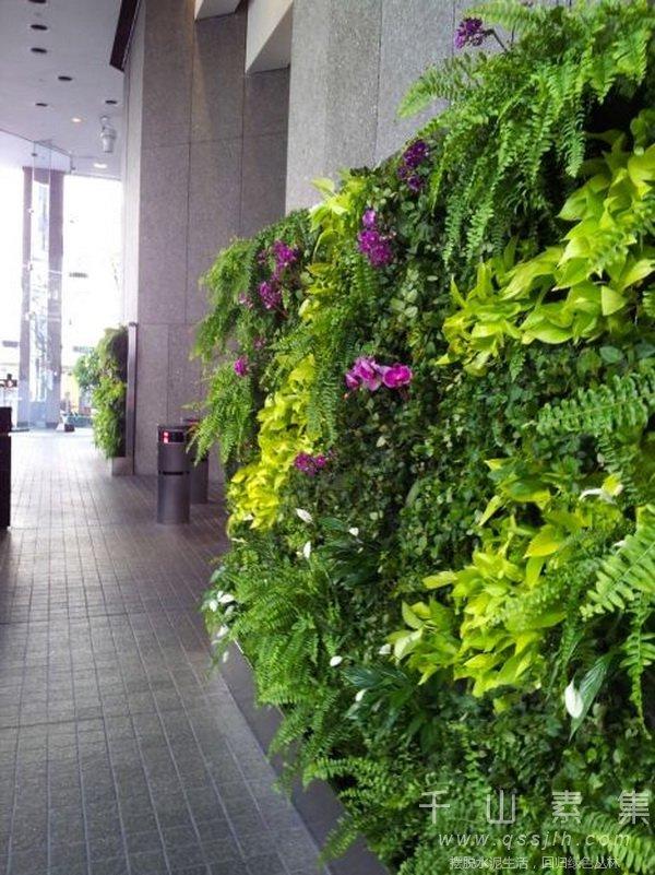 植物幕墙,植物幕墙绿化