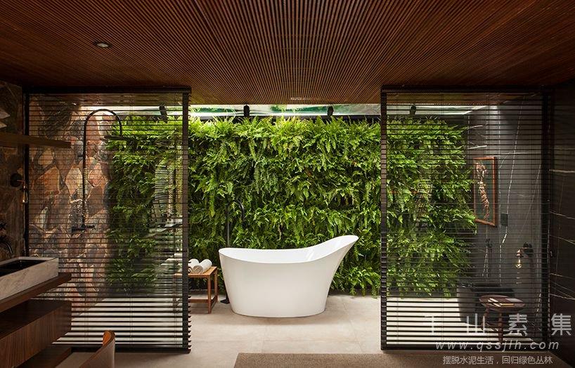 蕨类植物墙