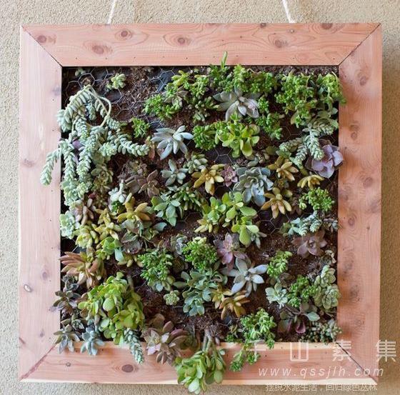 小面积植物墙,植物墙造景