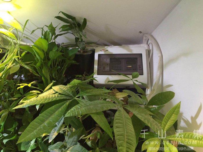 水培植物墙,自动灌溉系统