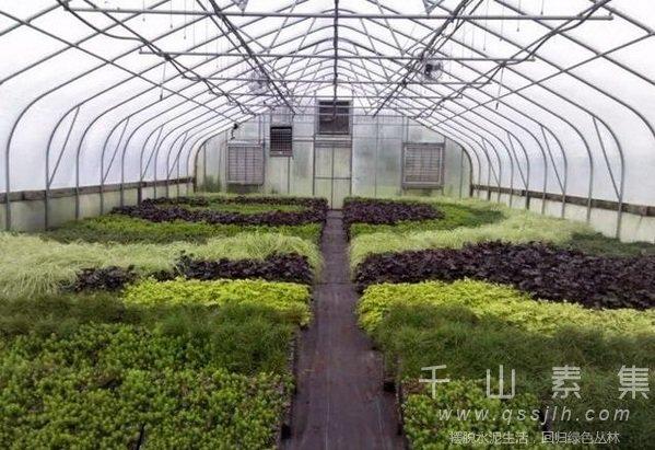 植物墙设计,植物墙维护