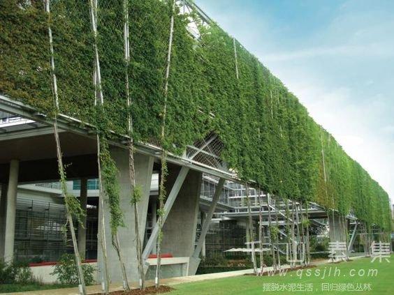 立体绿化研究