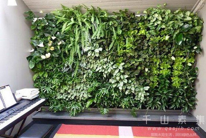 植物墙过冬