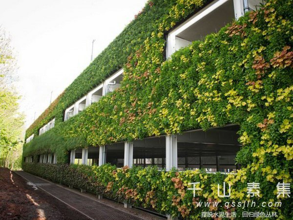 植物墙技术,植物墙行业