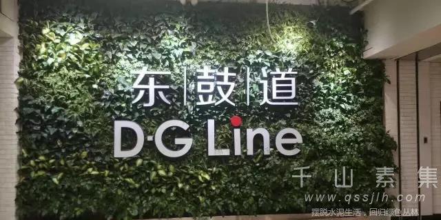 品牌垂直绿化