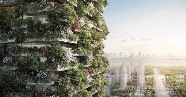 建筑植物墙,阳台植物墙