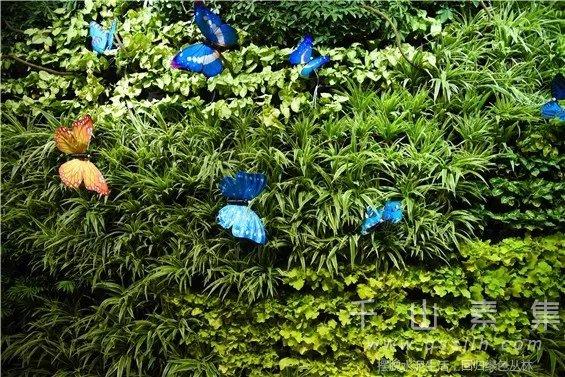 创意植物墙