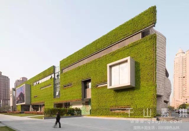 办公室植物墙,植物墙设计