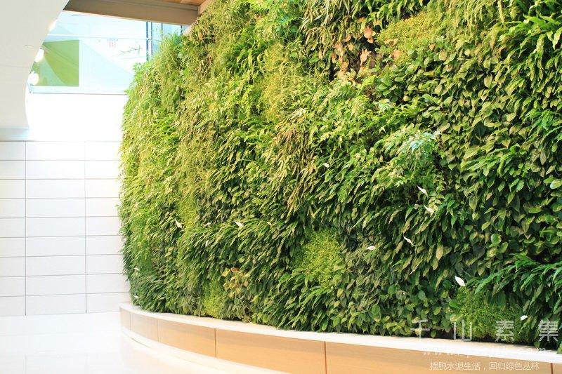 植物墙养护,植物墙药剂