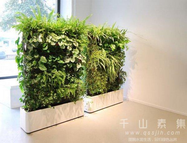 移动式植物墙,植物屏风