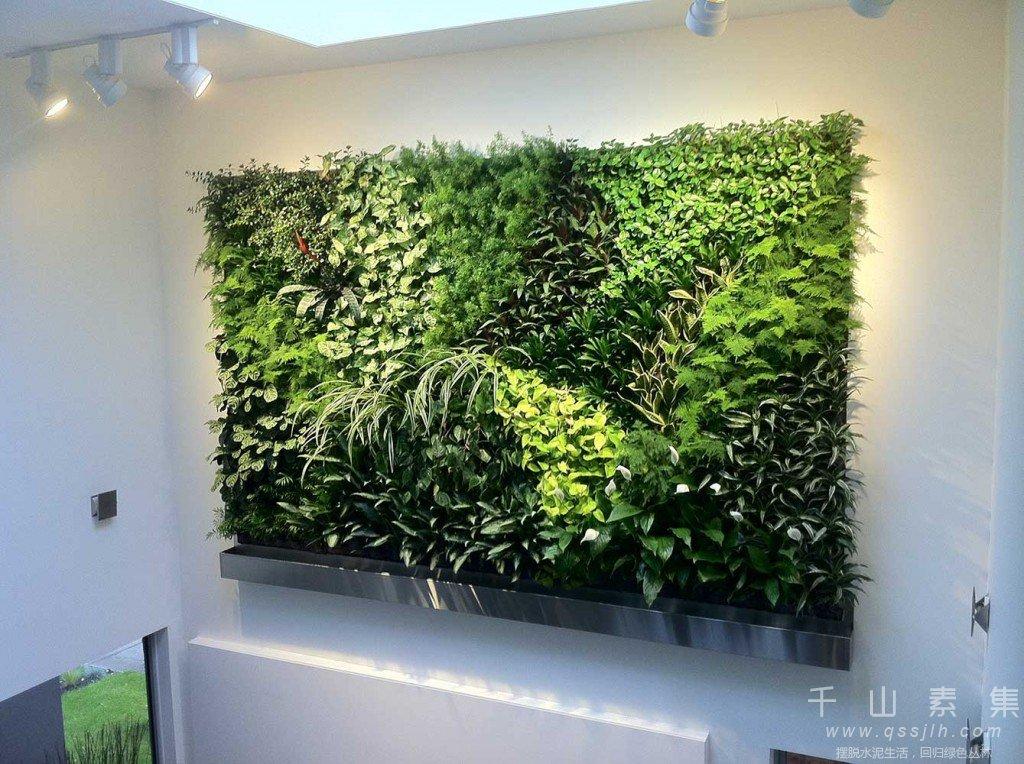 植物墙养护