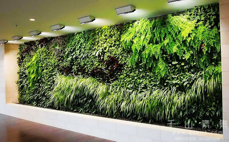 智能植物墙,生态植物墙,植物墙养护