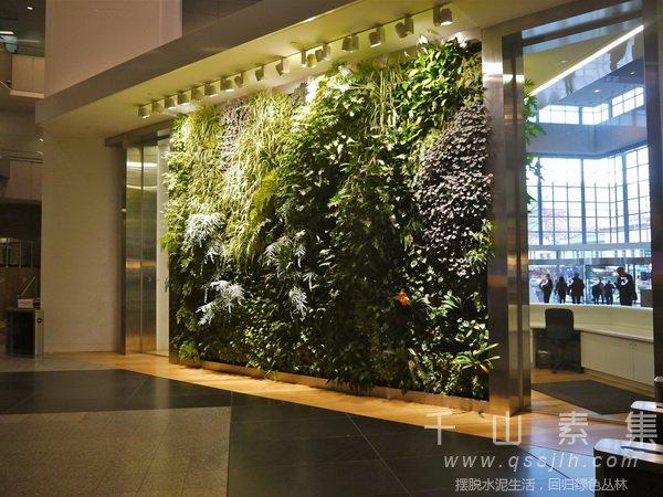 植物墙养护,冬季植物墙,植物墙技术