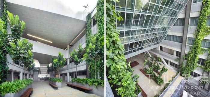 学校垂直绿化,垂直绿化景观,垂直绿化设计