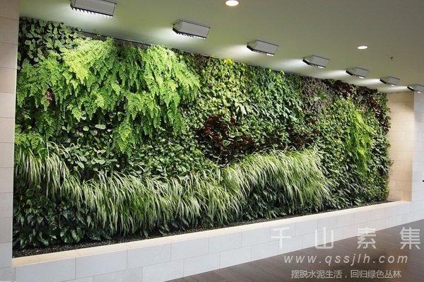 植物墙打造,植物墙设计,植物墙养护