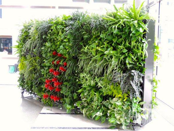 植物屏风,小品植物墙,植物墙设计