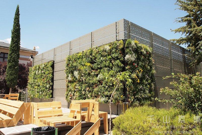 建筑植物墙,学校植物墙,植物墙设计