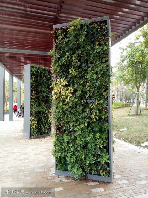 植物墙.jpg