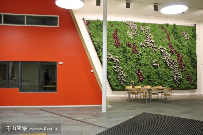 学校垂直绿化