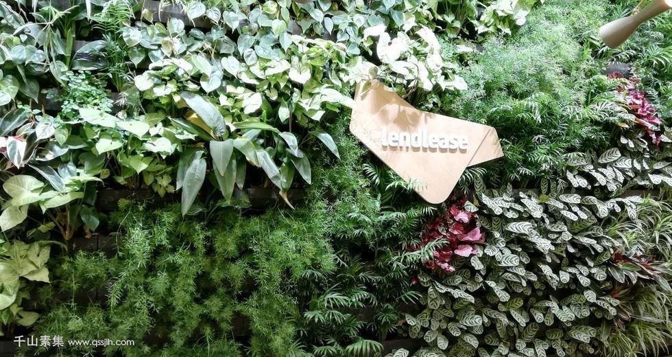 佛山植物墙