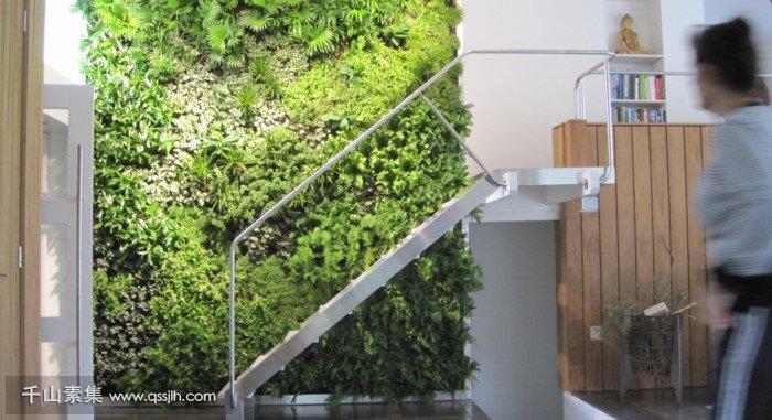 洛阳植物墙