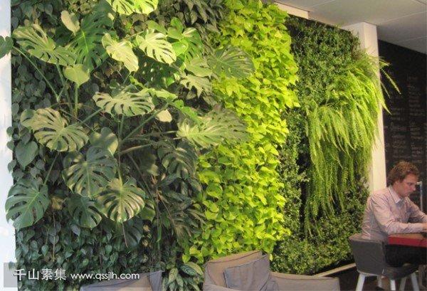 厨房植物墙