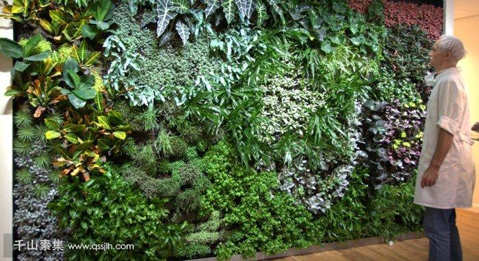 医院垂直绿化