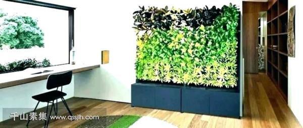 武夷山植物墙