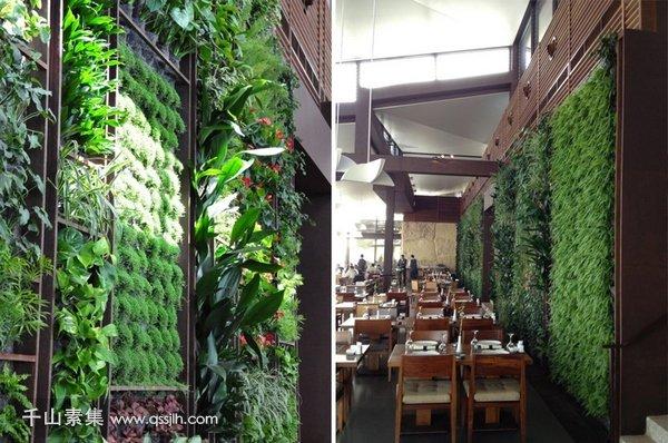 室内垂直绿化